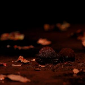 IsabeyParis-Prends-moi-Cocoa