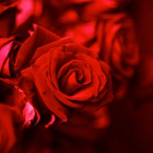 IsabeyParis-Prends-moi-Rose